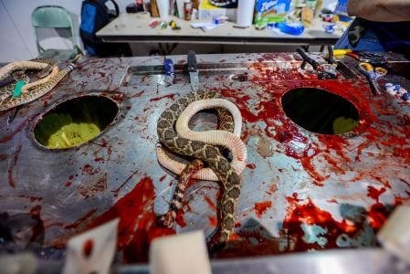 Rattlesnake Slaughter