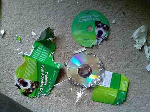 DVD de entrenamiento para perros