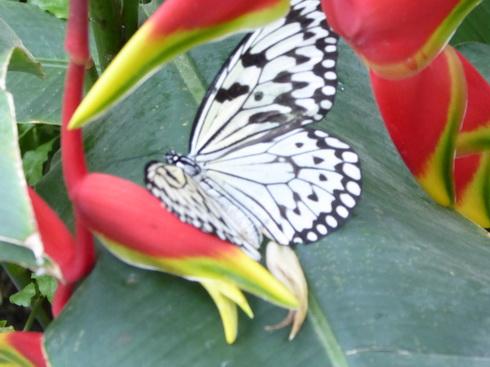 Garten Der Schmetterlinge Schloss Sayn Bendorf Sayn Schmetterlinge