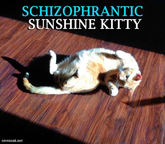 Schizophrantic Sunshine Kitty Riley
