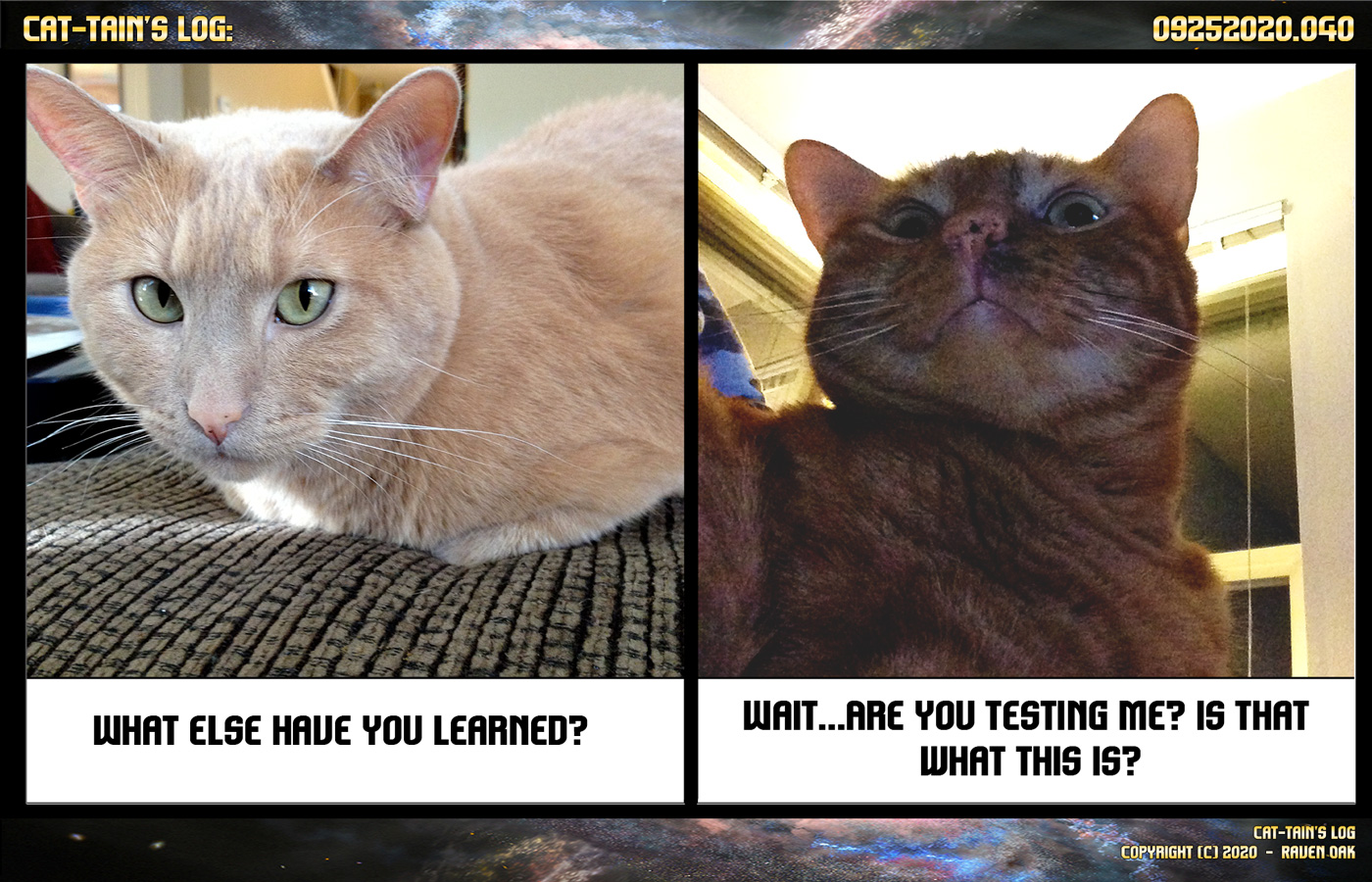 cat-tain's log episode 040