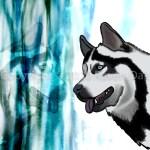 Husky by Raven Oak
