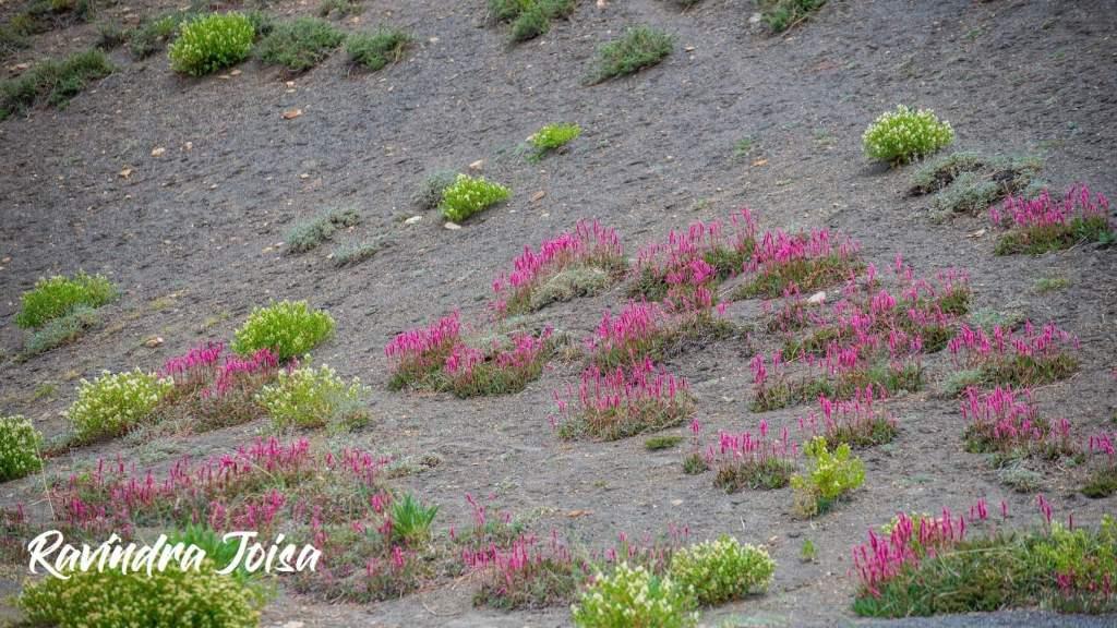 Wildflowers on the way to Kanamo