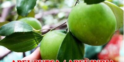 Apel Putsa Unggul