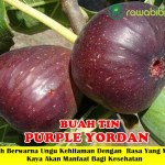Bibit Buah Tin Purple Yordan