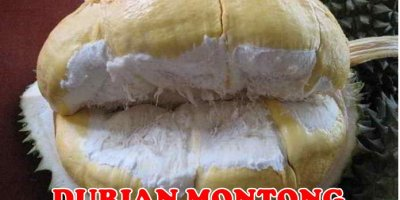 Durian Montong Unggul