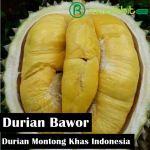 Durian Bawor, Buah Durian Unggul Dengan Predikat Montongnya Khas Indonesia