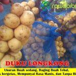 Bibit Duku Longkong