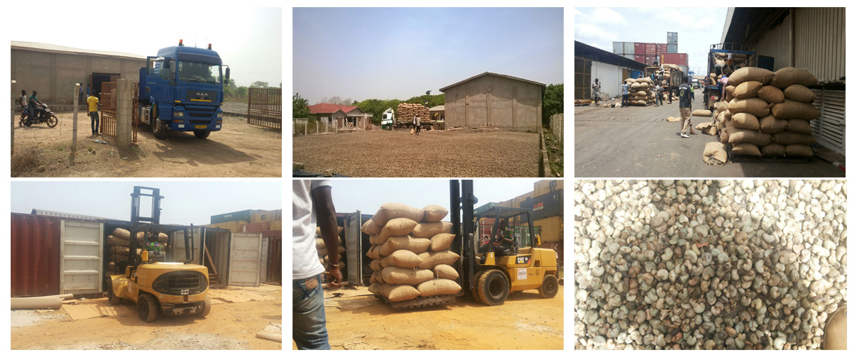 Raw Cashewnuts importer from Africa