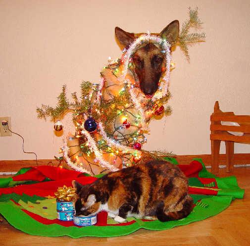 Christmas German Shepherd Pictures Page 2 German