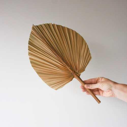 shop dried palm fan