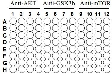 AKT/GSKß/mTor ELISA Kit