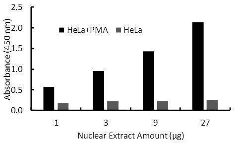 Sp1 Transcription Factor Activity Assay