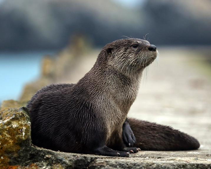 Trailside Museum Otter Exhibit to be updated by RDLA