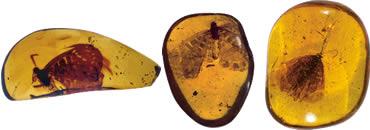 Yantar Sphinx: The Yellow Poem
