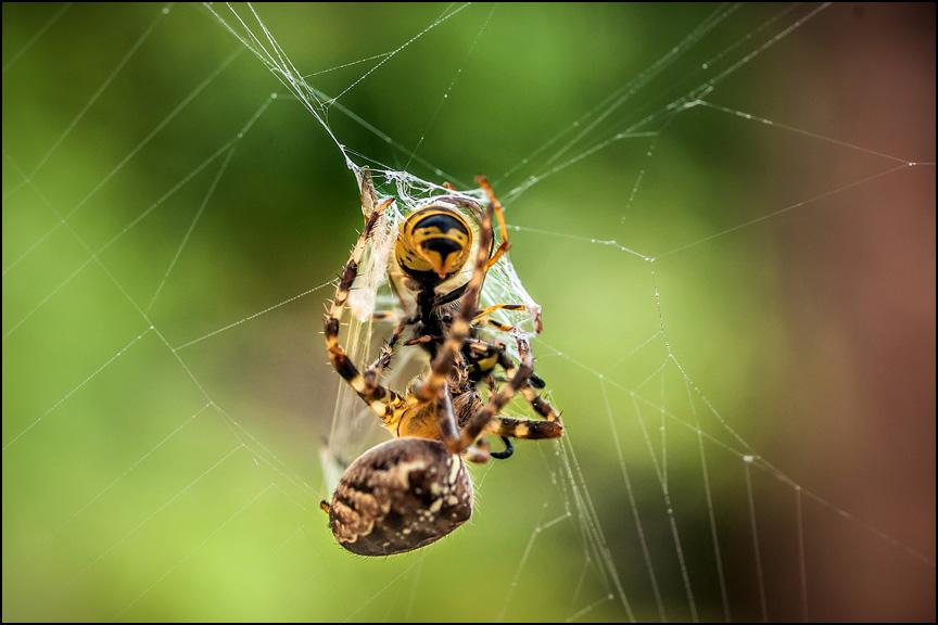 Spider 001