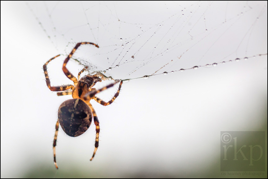 Spider fixing web 1