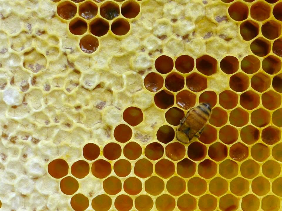 bee cells game free