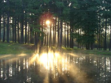 sun on mist through trees