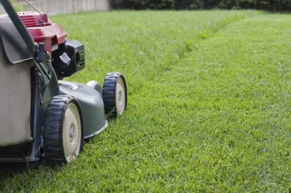 grass cutting rays garden service