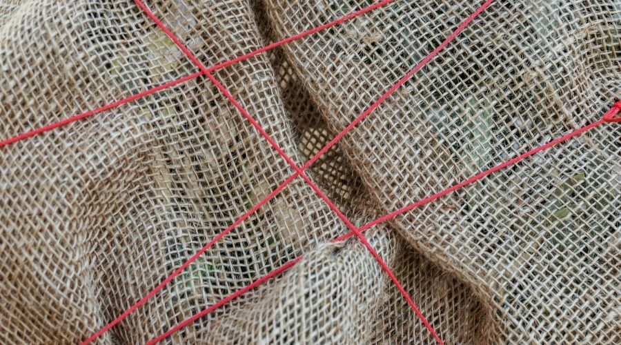 Burlap or jute wrap around a plant to protect it and tied with red string.