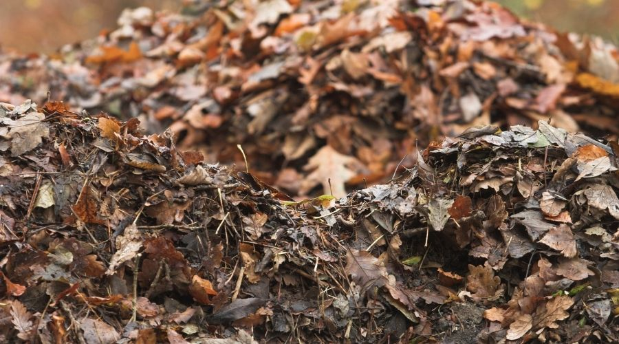 Leaf mulch piled up and decomposing.