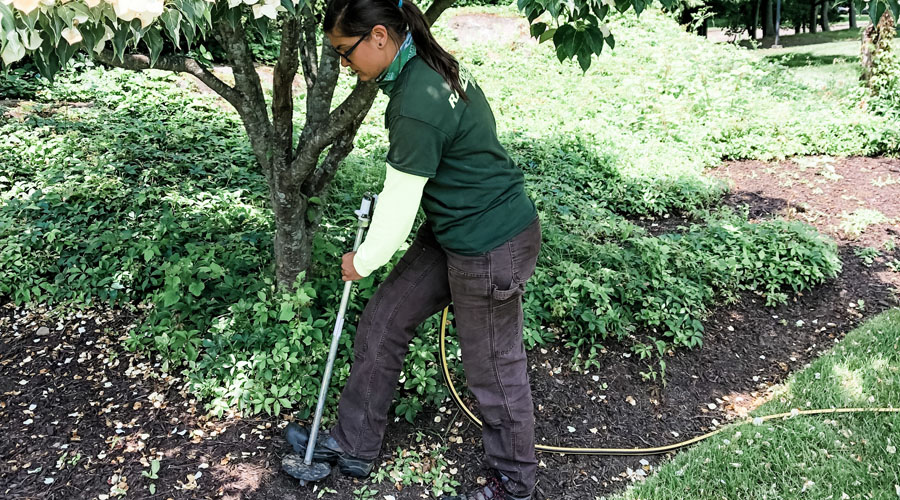 A Rayzor's Edge Tree Service employee provides deep root fertilization to a tree in Connecticut