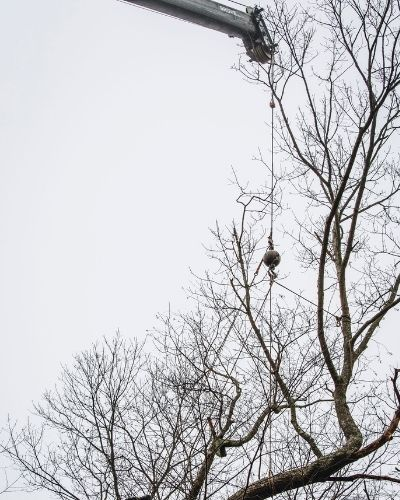 A Rayzor's Edge Tree Service employee removes a tree in Connecticut in the winter