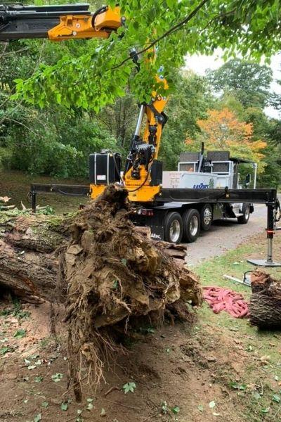 A fallen tree as part of damage after a Connecticut summer storm.