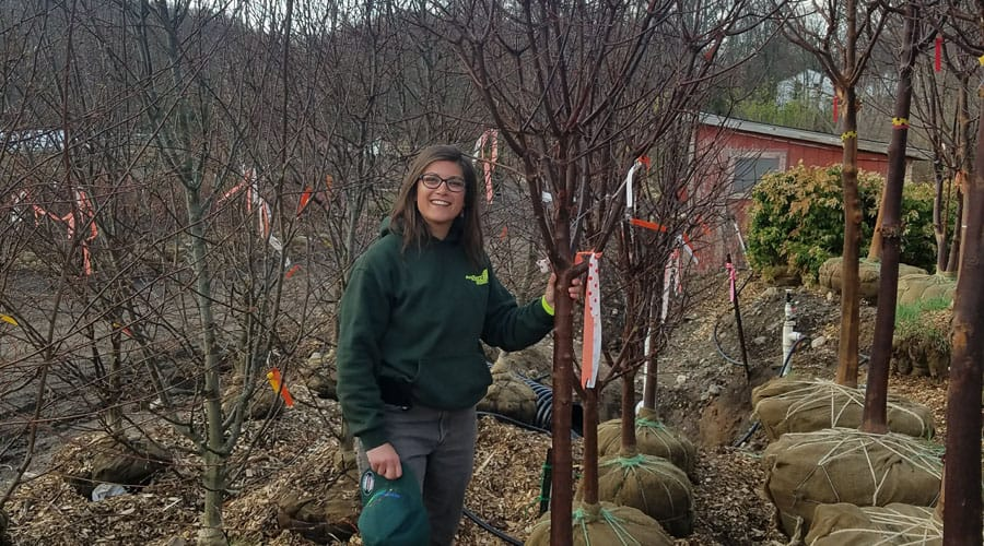 A Rayzor's Edge Tree Service employee poses with trees ready to plant
