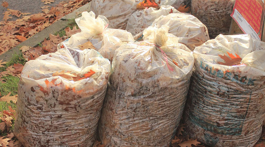 bagged leaves for landfill