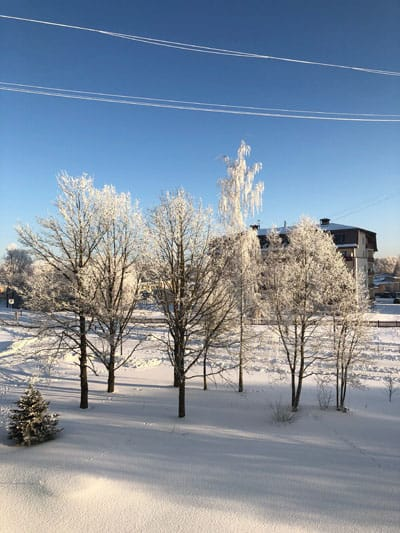 A group of smaller trees under a powerline is covered with ice or frost