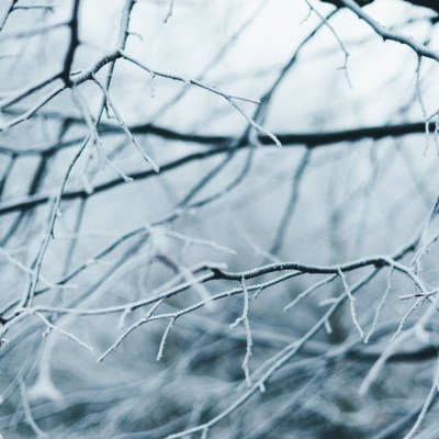 blog winter pruning branches header