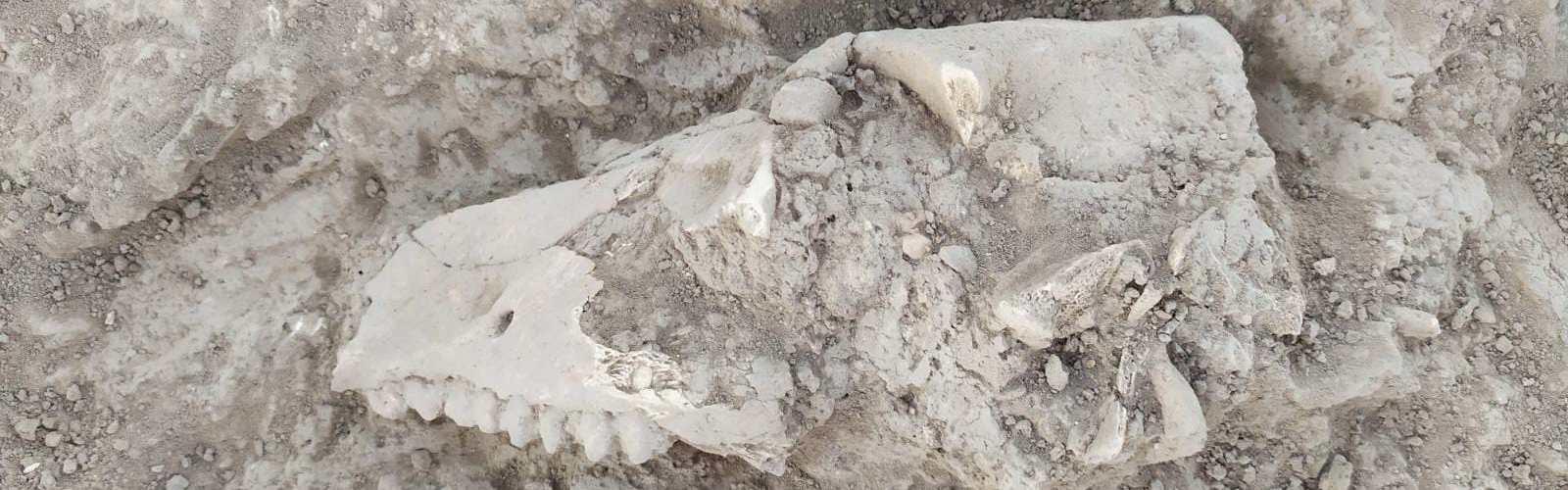 Arqueología y Geología: ¿historia de un match?