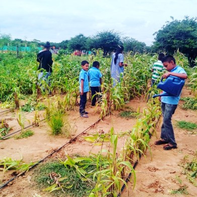 Cultivo autosostenible con sistema de riego en La Guajira.