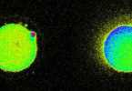 Embrion Humano Concepcion