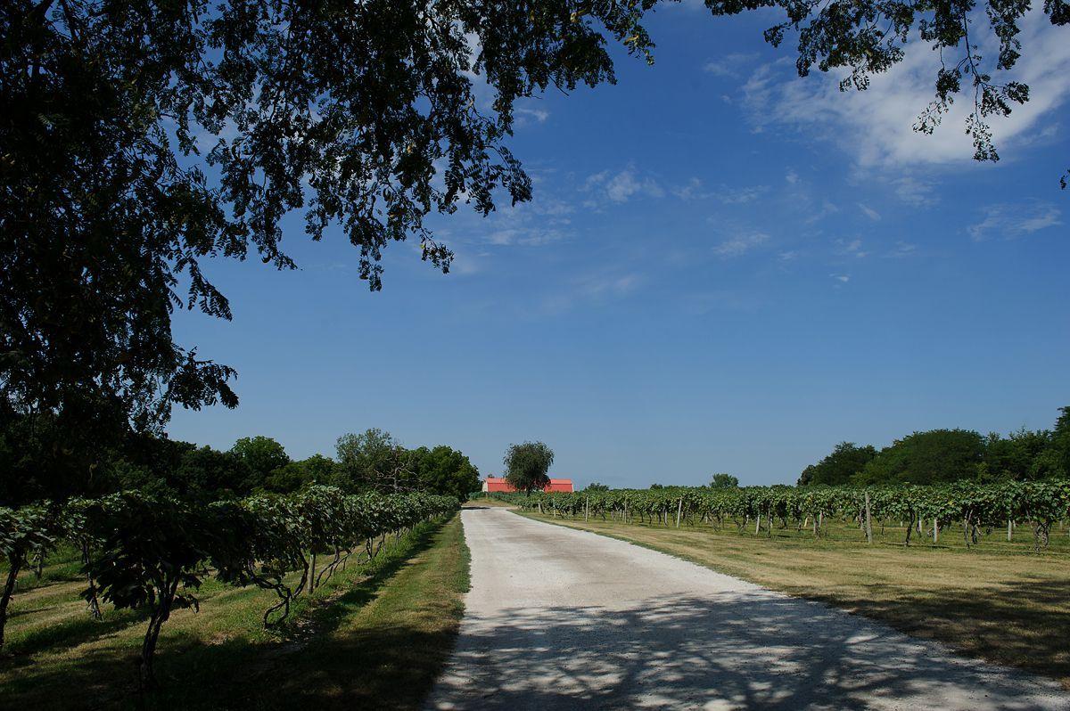Summerset-Winery-wedding-Amanda-Seth-001