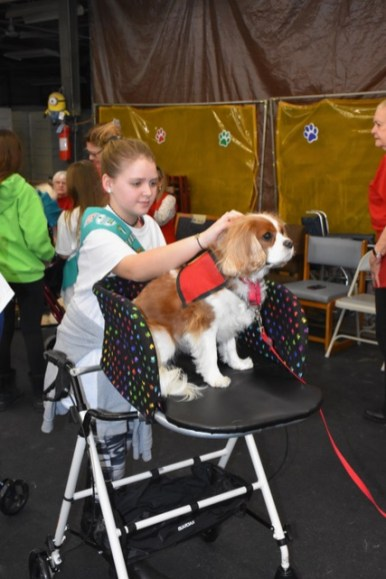 Girl Scout Ella Johns shows off a therapy dogs= aboard one of the new Puppy Pushers. (Provided)