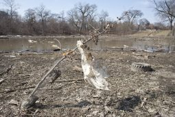 Following the February thaw, Swan Pond Park was a desolate stretch of mud, debris and ruined landscape. (File 2014)