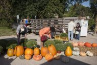 People search for pumpkins and plants during the Brookfield Farmers Market on Sept. 26. | William Camargo/Staff Photographer