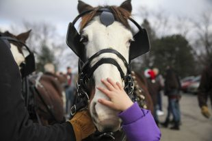 Nice nose: A young girl reaches up to pet one of the horses pulling Santa's sleigh during the 2014 Brookfield Holiday Walk. | File 2014