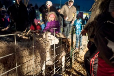 A petting zoo at Eight Corners was a popular spot for families during the Holiday Walk. | William Camargo/Staff Photographer