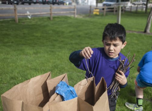 David DeLeon disposes of stray tree branches that he collected from around Kiwanis Park in Brookfield during the village's spring Project NICE community cleanup event on April 22. | William Camargo/Staff Photographer