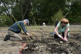 Volunteers John Plunkett, left, and Cathy Maloney, both of Riverside, fill dug up spots with a tall grass species on Aug. 10. | Alexa Rogals/Staff Photographer