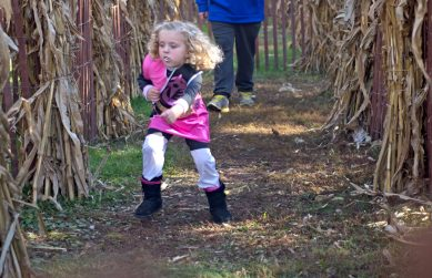 A child runs through the corn maze on Oct. 21, during the Boo at the Zoo event at Brookfield Zoo. | Alexa Rogals/Staff Photographer