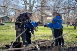 Groups of RBHS students dig a hole to plant a pecan tree on April 28, during the Riverside Brookfield High School Day of Service at Indian Gardens in Riverside. | Alexa Rogals/Staff Photographer