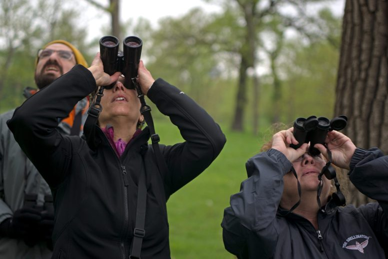 Melinda Pruett-Jones, executive director of the American Ornithological Society, and Riverside resident Cathy Maloney (right) train their binoculars skyward during a guided tour on World Migratory Bird day, May 12, along the river in Riverside. Pruett-Jones led the tour-goers, who spotted 58 species, 29 of which were migratory. | Alexa Rogals/Staff Photographer