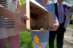 Monarch butterflies are released from a box on May 17 during a sculpture unveiling and surprise butterfly release at Blythe Park School in Riverside.   Alexa Rogals/Staff Photographer