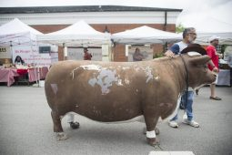 Attendees take photos with the Brookfield Restaurant cow on Saturday, Sept. 8, 2018, during the weekly Brookfield Farmers Market at Village Hall.   Alexa Rogals/Staff Photographer