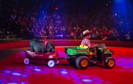 A big is wheeled out into the ring on Saturday, April 20, 2019, during the Circo Hermanos Vasquez traveling circus in the parking lot at North Riverside Park Mall. | ALEXA ROGALS/Staff Photographer